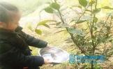 丹棱县顺龙小学开展植树节活动
